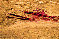 Banderillas (barbed sticks used in bullfighting), covered by blood, lie on the floor of the bullring in Torremolinos, Spain, 28 July 2006.