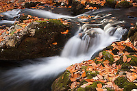 Mountain stream and waterfall among beautiful Fall leaves.