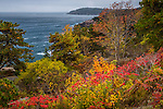 Fall foliage on Ocean Drive in Acadia National Park, Maine, USA