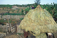 Thatching roof with sabal palm leaves; Cuba