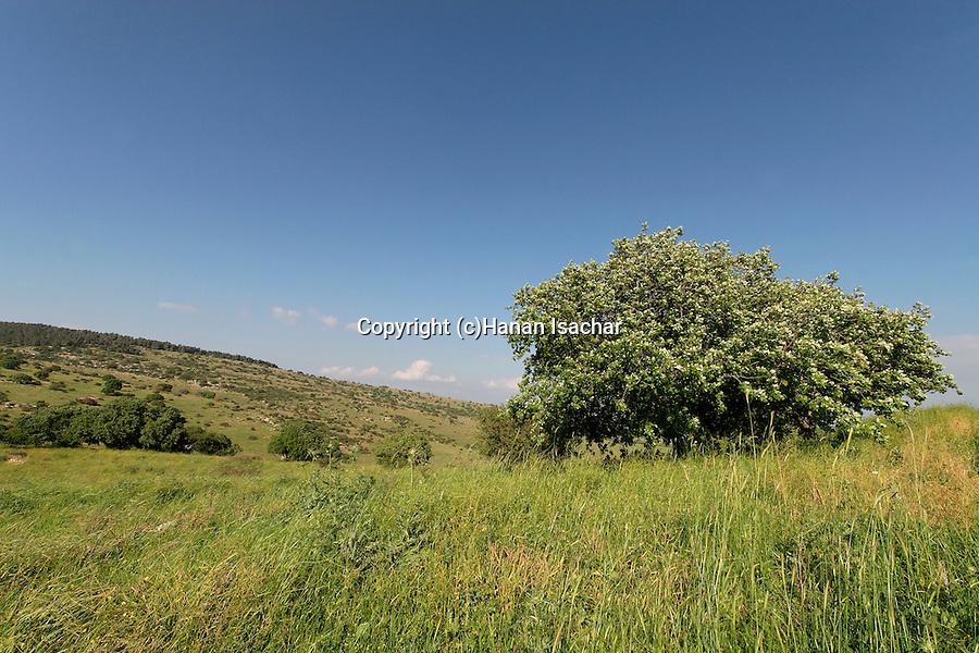 Israel, Lower Galilee. Tel Govel by Beth Keshet scenic road