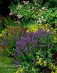 Floribunda Roses, Flower Garden, Fern Canyon Garden, Mill Valley, California