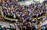 HALLANDALE BEACH, FL - JANUARY 27: The paddock on Pegasus World Cup Invitational Day at Gulfstream Park Race Track on January 27, 2018 in Hallandale Beach, Florida. (Photo by Scott Serio/Eclipse Sportswire/Getty Images)