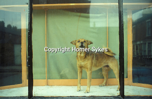 Dog in window Hessle Road area, Hull Humberside  1981,