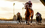 February 15, 2020: #7 Finite and jockey Ricardo Santana Jr. win the Grade 2 Rachel Alexandrea Stakes in an upset during Risen Star Stakes Day at Fair Grounds Race Course in New Orleans, Louisiana. Scott Serio/Eclipse Sportswire/CSM