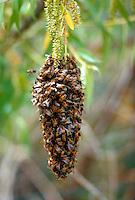 Beehive.