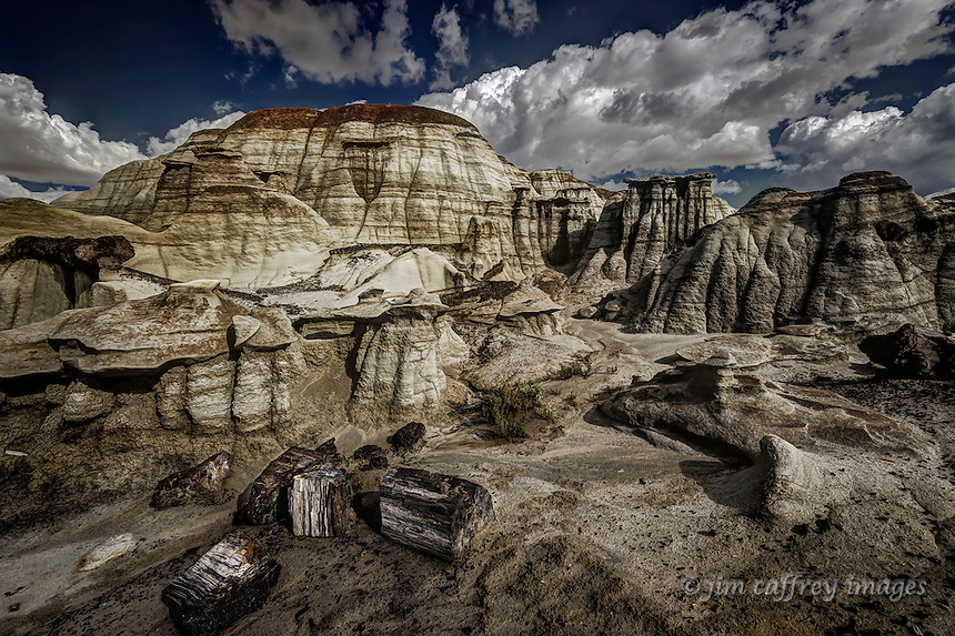 Petrified wood near Alamo Wash in the Bisti Wilderness of northwestern New Mexico.