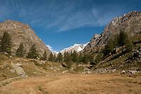 Grass grows below the conifers that dot the terminal moraine of the Glacier de Miage.