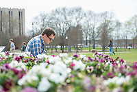Studying next to pansies.<br />