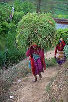Women carry a huge load from the fields near Bungamati Village, Nepal, Kathmandu