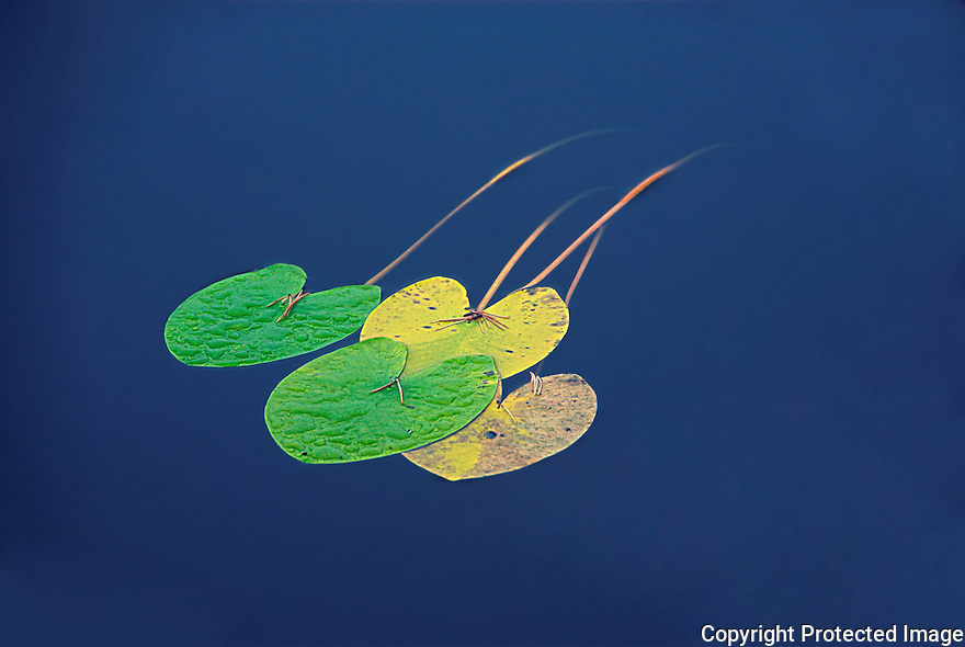 Colorful leafs floating on the water surface