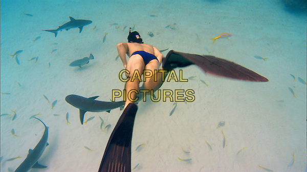 SCENE.in Sharkwater.*Filmstill - Editorial Use Only*.CAP/PLF.Supplied by Capital Pictures.