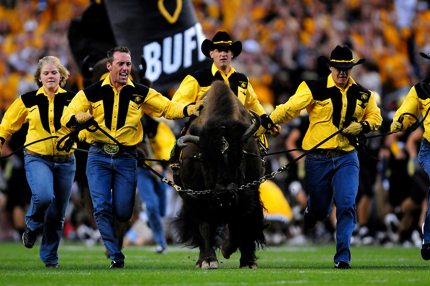31 Aug 2008: Colorado mascot Ralphie the buffalo is led across the field by handlers during halftime of a game against Colorado State. The Colorado Buffaloes defeated the Colorado State Rams 38-17 at Invesco Field at Mile High in Denver, Colorado.