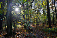 Autumn in Stoke Wood, Oxfordshire