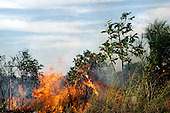 Amazon, Brazil. Burning rainforest to clear land for agriculture.