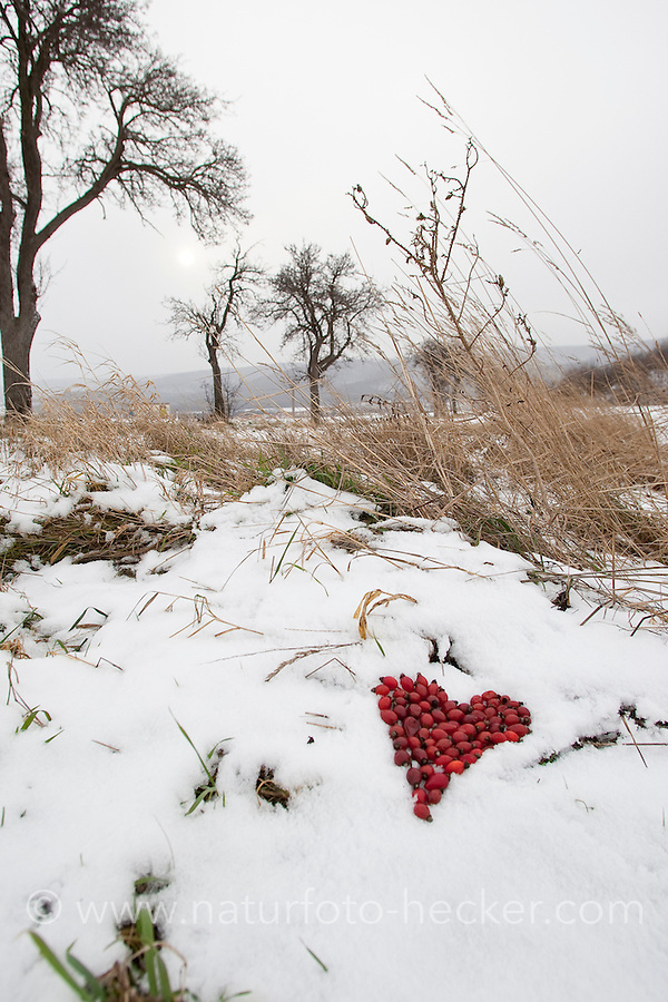Naturkunst im Winter, mit roten Hagebutten, Hagebutte wird ein Herz in den Schnee gelegt