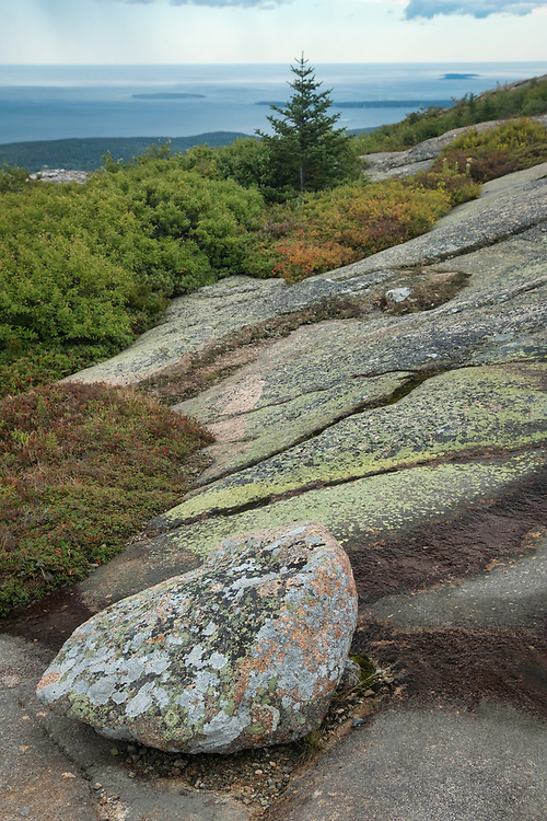 Lichen-covered granite rocks and foliage anchor this scene on Cadillac Mountain, Acadia National Park