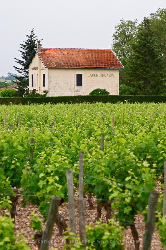 Chateau Lafleur Gazin and vineyard Pomerol Bordeaux Gironde Aquitaine France