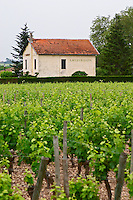 Chateau Lafleur Gazin and vineyard Pomerol Bordeaux Gironde Aquitaine France