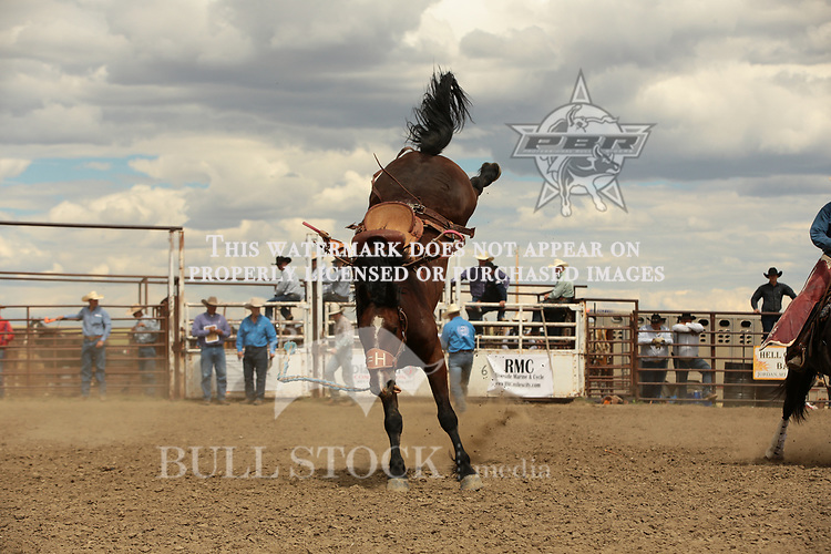 Goldman Realbird attempts to ride Stan Headings's J11 during the ABHR Jordan Bronc Match. Photo by Andy Watson