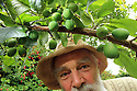 Peter Emerson with some of his Plum trees growing in his Rhubarb Cottage garden in North Belfast Wednesday July 3rd, 2019. (Photo by Paul McErlane for the Belfast Telegraph)