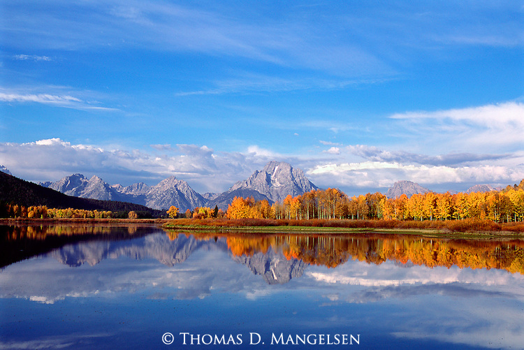 Clear, glassy skies and still waters echo a final reminder that summer is coming to a close as warm, westerly winds rattle the leaves from aspen trees along the Oxbow Bend in Grand Teton National Park, Wyoming.