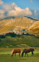 Horses on the Piano Grande, Great Plain, of Castelluccio di Norcia, Parco Nazionale dei Monti Sibillini , Apennine Mountains,  Umbria, Italy.