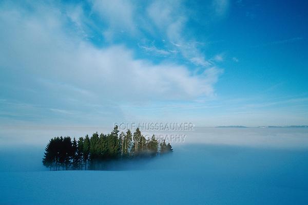 Woods in winter fog shredded, Switzerland