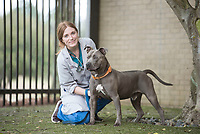 "Student Anna Walker, Class of 2019,  with canine patient ""Man"" a pitt bull."