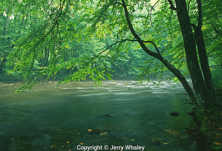 Oconaluftee River, Great Smoky Mountains National Park, TN