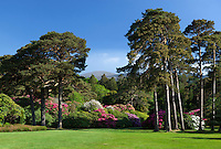 Ireland, County Kerry, near Killarney, Killarney National Park: Muckross Estate, the gardens of Muckross House with Rhododendrons | Irland, County Kerry, bei Killarney, Killarney National Park: Muckross Estate, im Park des Muckross House mit Rhododendron
