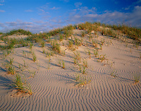 Cape Hatteras National Seashore, NC<br /> Morning light on beach grasses and rippled sand dunes of Ocracoke Island