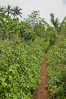 Trail on the upper slopes of Mount Manucoco, Atauro Island, Timor-Leste (East Timor)