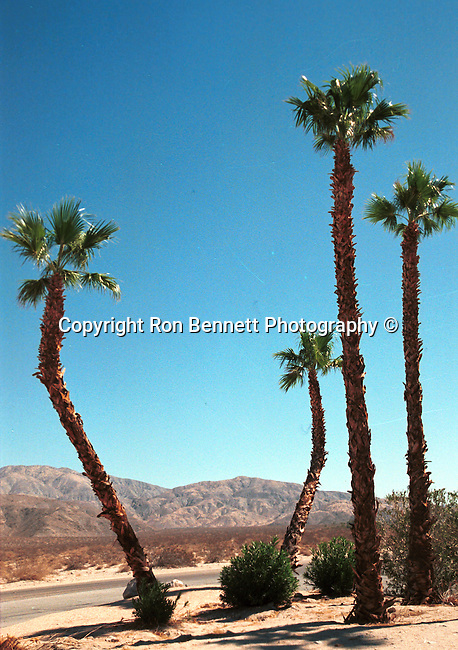 """Palm Springs San Andreas Fault is a continental transform fault runs 800 miles through California fault's motion is right-lateral strike-slip (horizontal motion) Carrizo Plain, California Fine Art Photography by Ron Bennett, Fine art Photography and Stock Photography by Ronald T. Bennett Photography ©, FINE ART and STOCK PHOTOGRAPHY FOR SALE, CLICK ON  """"ADD TO CART"""" FOR PRICING, California Fine Art Photography by Ron Bennett (c), California Fine Art Photography by Ron Bennett,"""