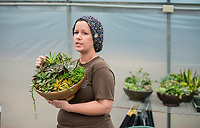 NWA Democrat-Gazette/BEN GOFF @NWABENGOFF<br /> Megan Lankford, Botanical Garden of the Ozarks horticulture supervisor, talks about caring for succulent plants Saturday, Jan. 12, 2019, during a 'Succulent Make and Take' class at Botanical Garden of the Ozarks in Fayetteville. Participants learned how to care for the water-conserving plants native to arid climates and made their own arrangement to take home.