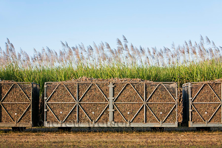 Loaded sugar cane bins ready to be transported to a mill.  Cairns, Queensland, Australia
