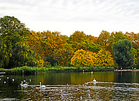 London's Hyde Park is full of autumn colour at this time of the year, Hyde Park, London on October 28th 2019<br /> <br /> Photo by Keith Mayhew