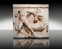 Sculpture of Lapiths and  Centaurs battling from the Metope of the Parthenon on the Acropolis of Athens no XXVII. Also known as the Elgin marbles. British Museum London. This is one of the most dramatic compositions of the Metopes with the Lapith preparing to make a final strike and the cloak of the Centaur fanning out