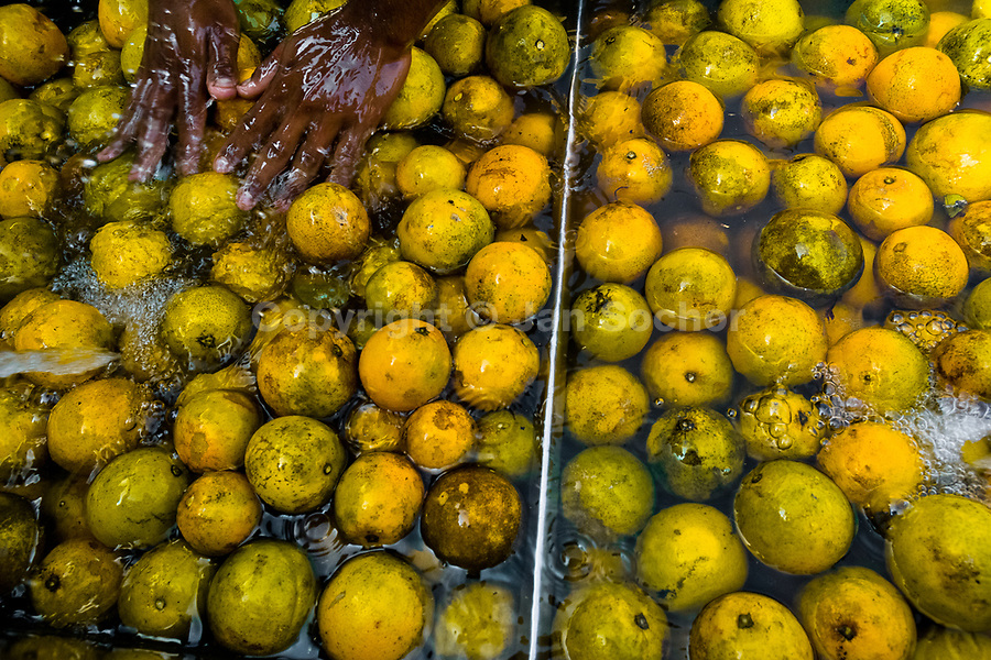 """A Cuban vendor washes oranges before selling them for juice on the street of Alamar, a public housing periphery of Havana, Cuba, 12 February 2009. The Cuban economic transformation (after the revolution in 1959) has changed the housing status in Cuba from a consumer commodity into a social right. In 1970s, to overcome the serious housing shortage, the Cuban state took over the Soviet Union concept of social housing. Using prefabricated panel factories, donated to Cuba by Soviets, huge public housing complexes have risen in the outskirts of Cuban towns. Although these mass housing settlements provided habitation to many families, they often lack infrastructure, culture, shops, services and well-maintained public spaces. Many local residents have no feeling of belonging and inspite of living on a tropical island, they claim to be """"living in Siberia""""."""