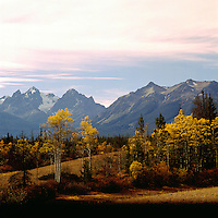 Cariboo Chilcotin Coast Region, BC, British Columbia, Canada - Coast Mountains and Trembling Aspen (Populus tremuloides) Trees, Autumn