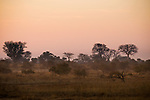 Savanna, Kafue National Park, Zambia