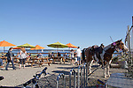 Port Townsend, local waterfront pub, the Pourhouse, complete with horses, Olympic Peninsula, Washington State, Pacific Northwest, USA,