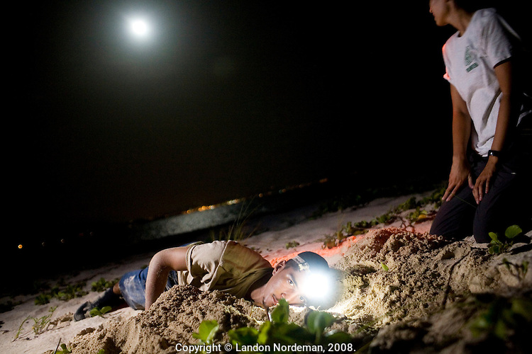 ST. CROIX - AUG 15: National Park Service turtle researcher Juan Rodriguez digs his arm down into the sand as far as he can searching for a clutch of turtle eggs as fellow resercher Amber Avestruz looks towards the water off the coast of Buck Island in St. Croix, U.S. Virgin. Islands on August 15, 2008. The eggs are buried deep in the sand by the mother turtle to protect her babies from predators until they are hatched, yet sometimes hatchlings are not strong enough to dig their way up and out after exiting the egg, and need help from turtle volunteers. (Photo by Landon Nordeman)