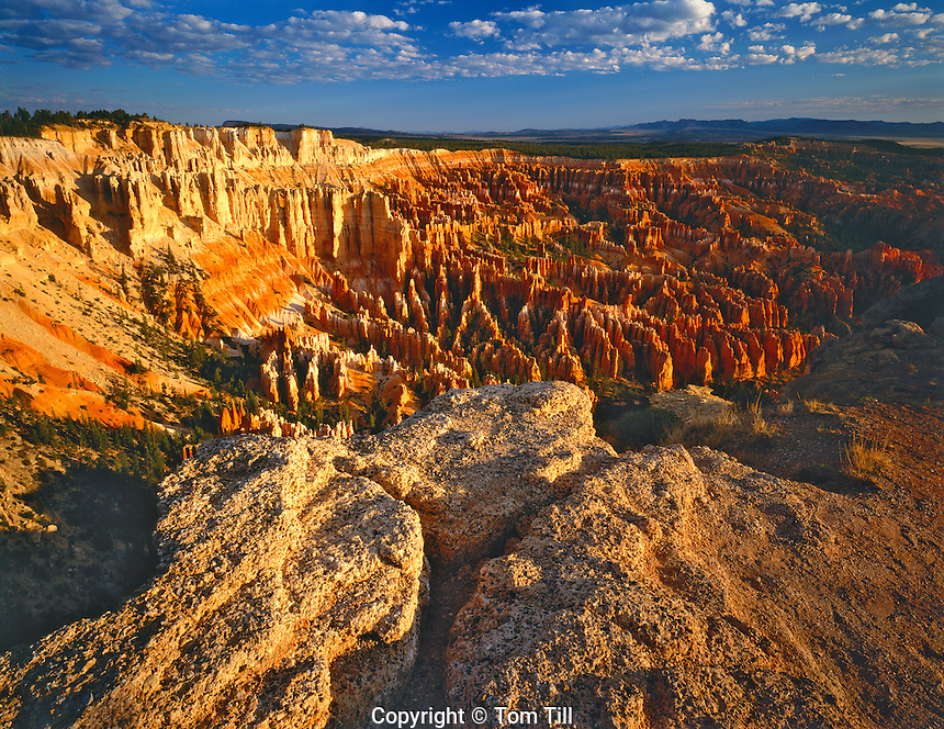 Bryce Amphitheater from Bryce Point in Summer Morning Light, Bryce Canyon National Park