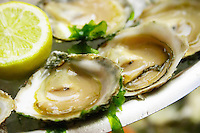 oysters belons