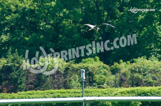 Heron at Delaware Park on 5/23/15