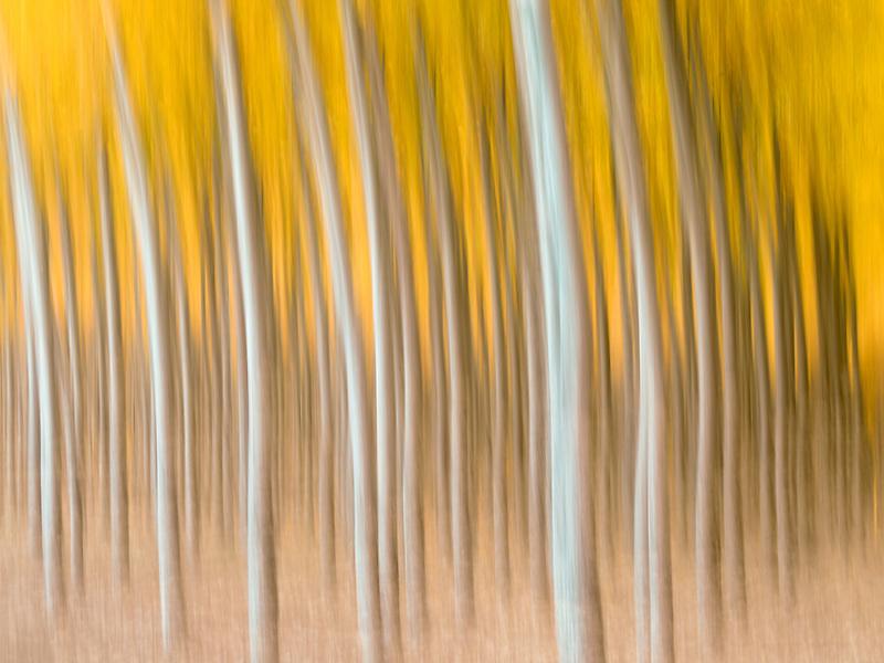 Pacific Albus (Poplar) tree farm, Boardman Tree Farm, Oregon