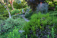 Stepping Stone pathway leading through drought tolerant Washington state Garden, Albers Vista Gardens