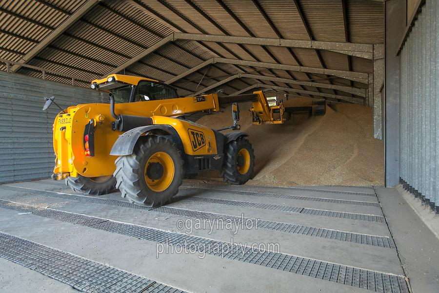 JCB pushing up grain in grainstore