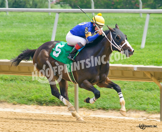 Spanish Prospector winning at Delaware Park on 8/10/16